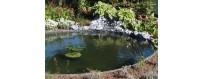 Aménagement bassin, Bassin à Carpes Koï